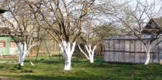 Защита от вредителей сада весной