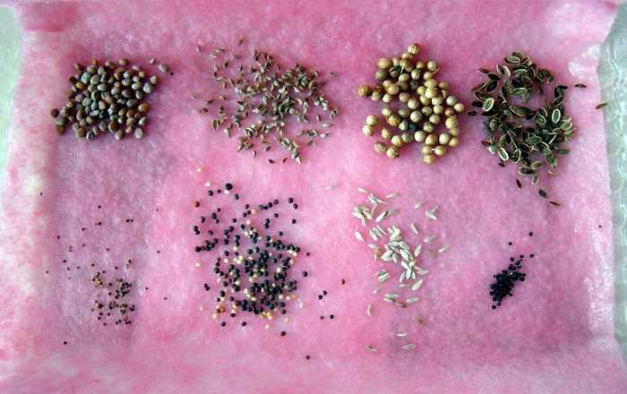Как обработать семена перед посадкой