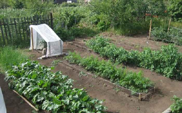 Работы летом в огороде июнь