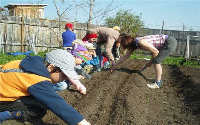Картинки о работе в огороде
