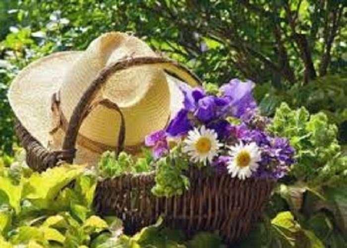 Календарь работ садовода на июнь