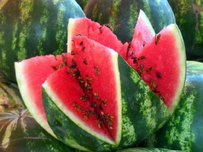 Секреты выращивания бахчи