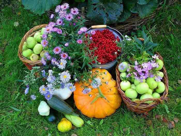 Чем подкормить овощи и кусты