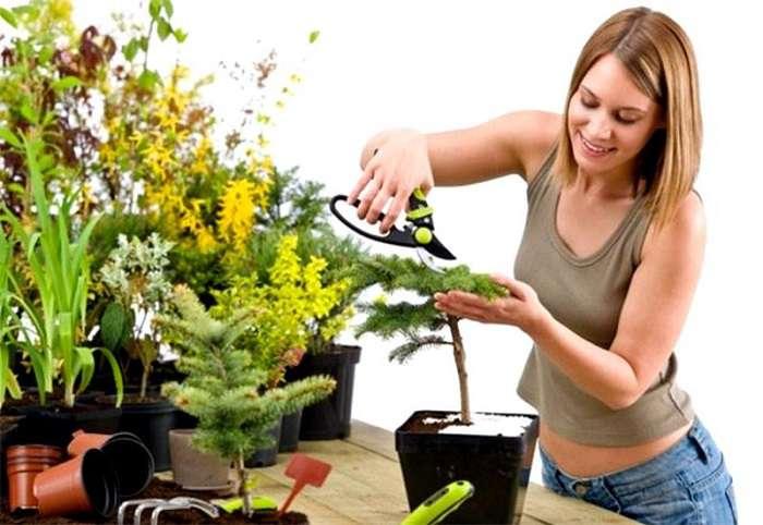 Натуральные удобрения для домашних цветов