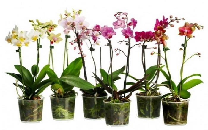 Орхидеи все намного проще