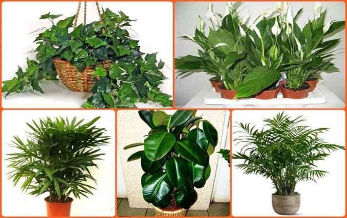 ТОП-5 комнатных растений