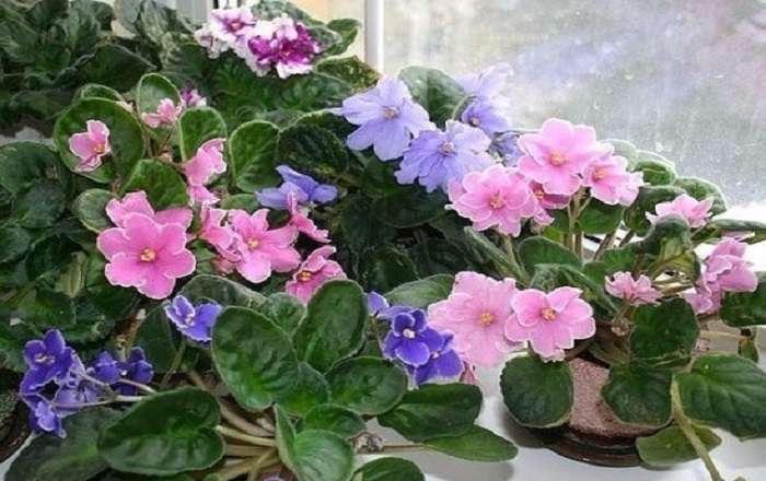 Как привлечь в дом счастье, любовь и достаток с помощью цветов