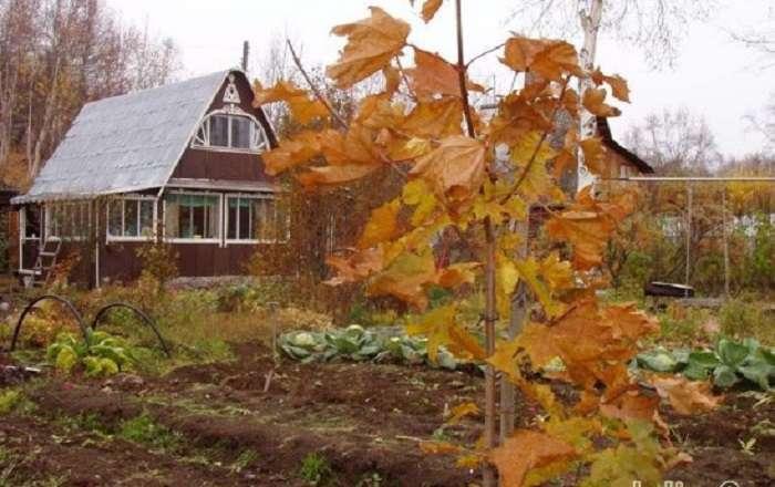 Работы в огороде в октябре и ноябре