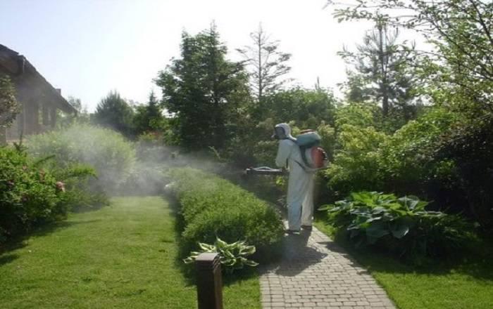 Просроченные лекарства для сада огорода