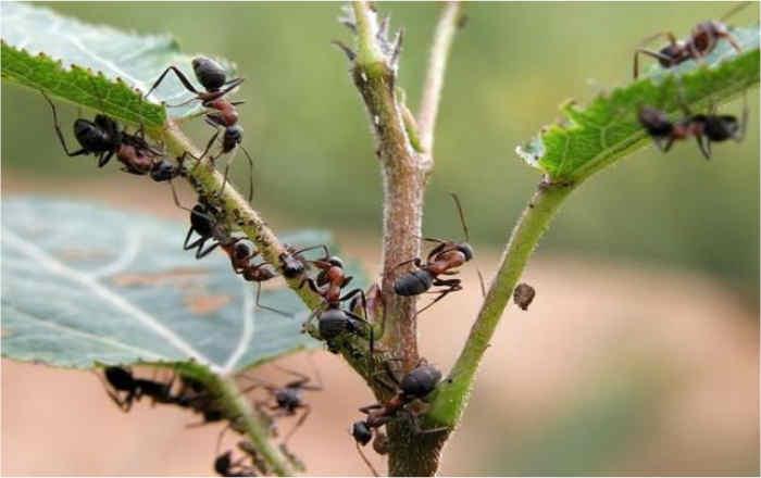 Народные советы от насекомых