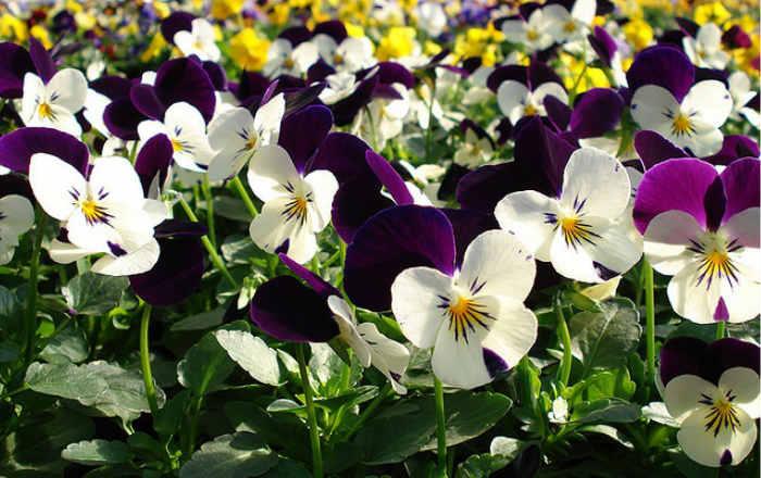 Цветы, которые сеют в феврале