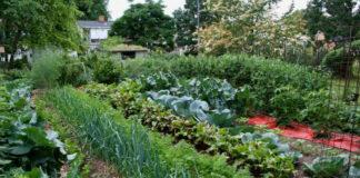 Полезные советы огороднику