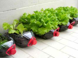 Способ выращивания рассады