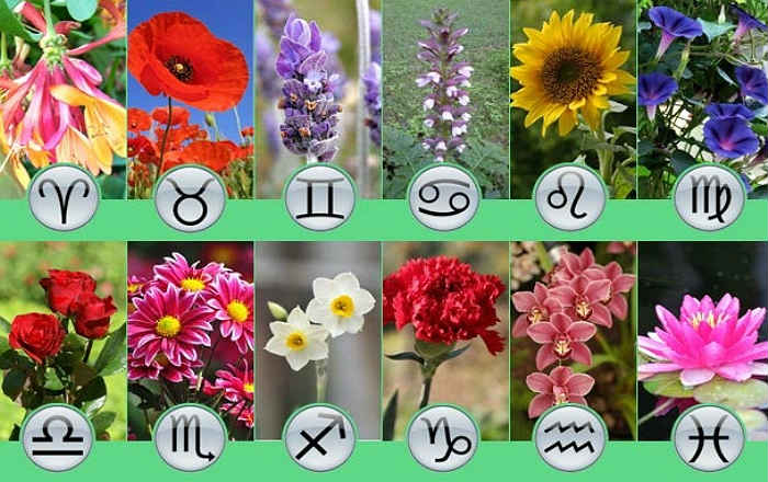 Цветы по знакам зодиака
