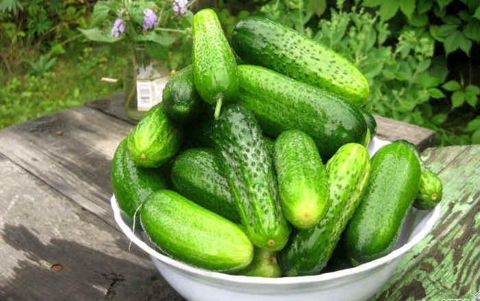 Выращиваем огурцы без химии