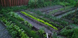 Соседство и вражда растений