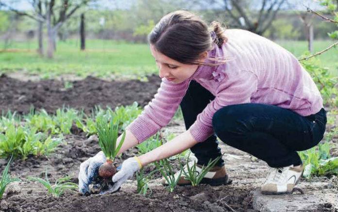 Нельзя сажать цветы дома 623