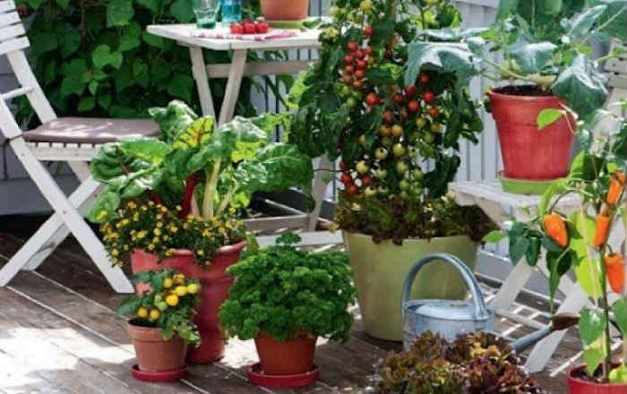 Растения для террасы