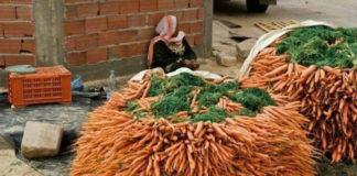 Сеем морковь с кофе