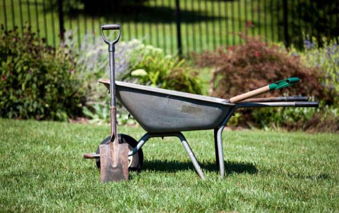 Ошибки садоводов
