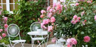 Когда сажать розы в саду