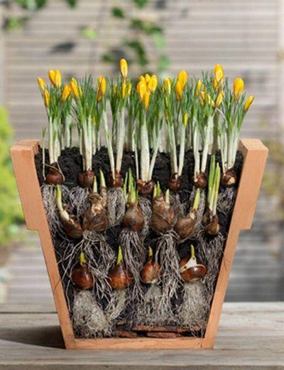 Секрет самого пышного и беспрерывного цветения — многослойная посадка.