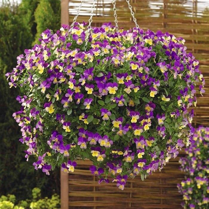 садовые ампельные цветы названия и фото абоненте