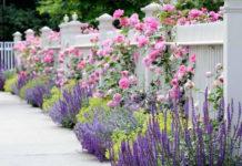 Как увеличить маленький садовый участок? 7 секретных приемов