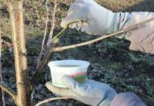 Садовый вар – как приготовить, где применять и чем можно заменить