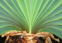 13 странных растений, которые могут расти у вас дома
