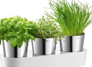 Свежесть зелени и трав круглый год: 15 идей для домашнего огорода на кухне