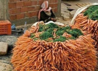Посадите морковь с кофе!