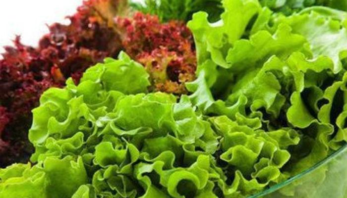 Какой салат посадить не горький