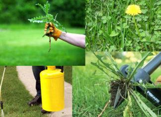 Борьба с сорняками на огороде гербицидами и народными средствами