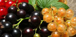 Очень полезные советы по выращиванию овощей и ягод