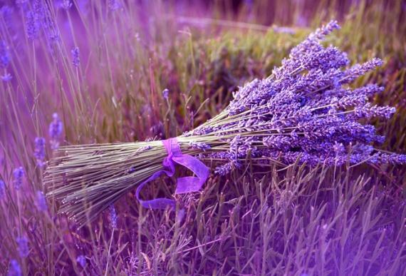 Готовимся к дачному сезону: цветы ...: www.огородсад.рф/gotovimsya-k-dachnomu-sezonu-cvety...