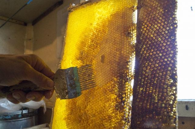 Пчелиные хитрости. Как правильно выбрать мёд?