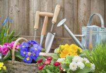 Готовимся к дачному сезону: цветы, которые стоит высадить в декабре и января