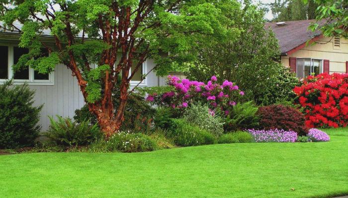 10 секретов идеального газона