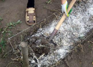 Когда почве нужно известкование