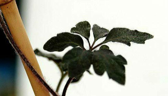 Опоры и подвязывание комнатных растений