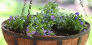С этими советами ваш сад станет лучшим в округе