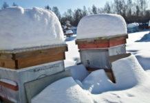 Зимняя подкормка пчел: изучаем все правила и особенности