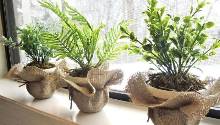 10 комнатных растений на удачу, деньги и семейное счастье