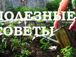 10 практичных советов для садоводов