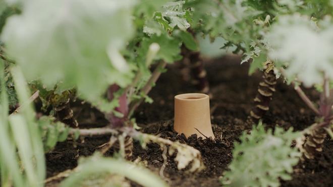 Глиняный кувшин, закопанный в грядку – новое использование старой технологии полива