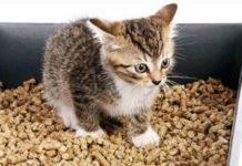 Как отучить кота метить в доме