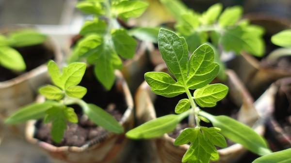 Сезонные работы в саду и огороде конец февраля - начало марта