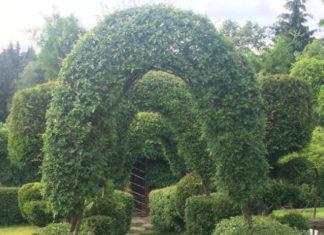 Собственный ботанический сад на девяти сотках