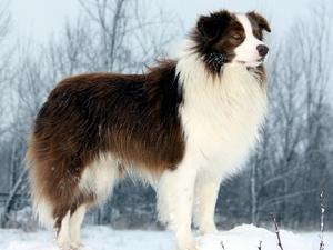 Характеристики самых лучших пород собак